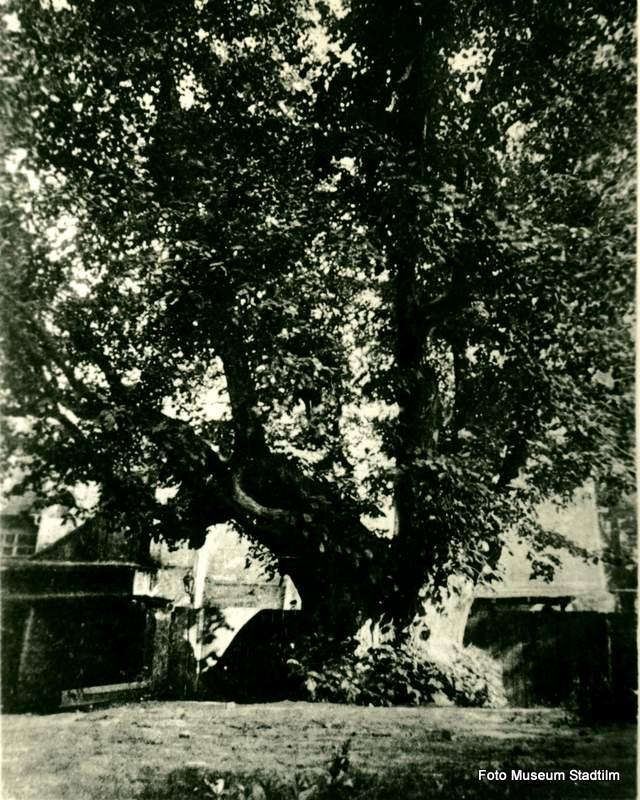 Ratskellergarten um 1905 mit Klosterlinde